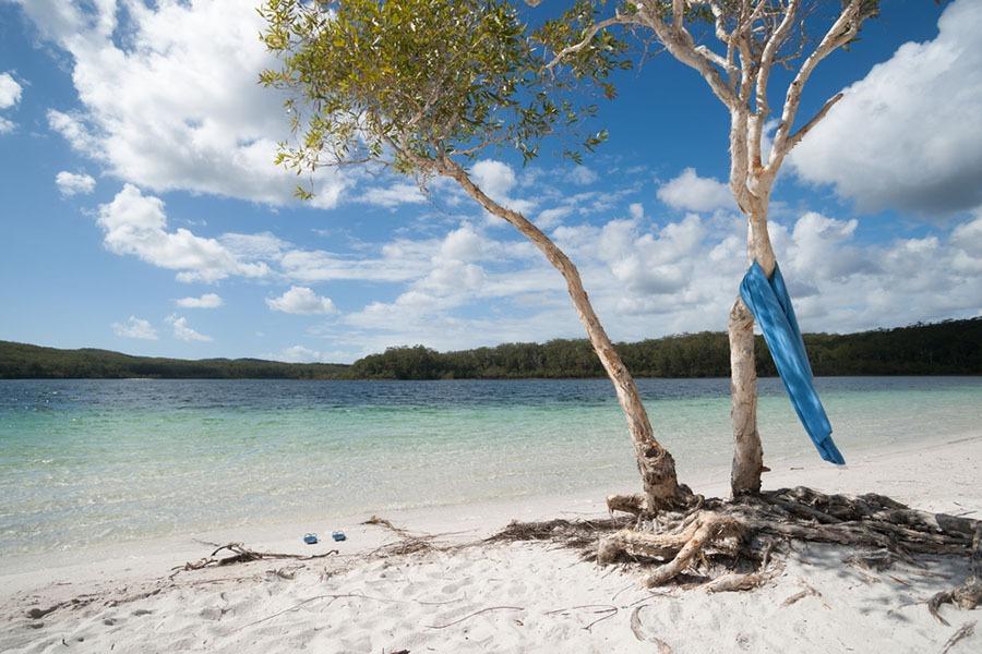 tin can bay activities tree on beach